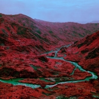 <strong>Richard Mosse</strong> Love Is The Drug